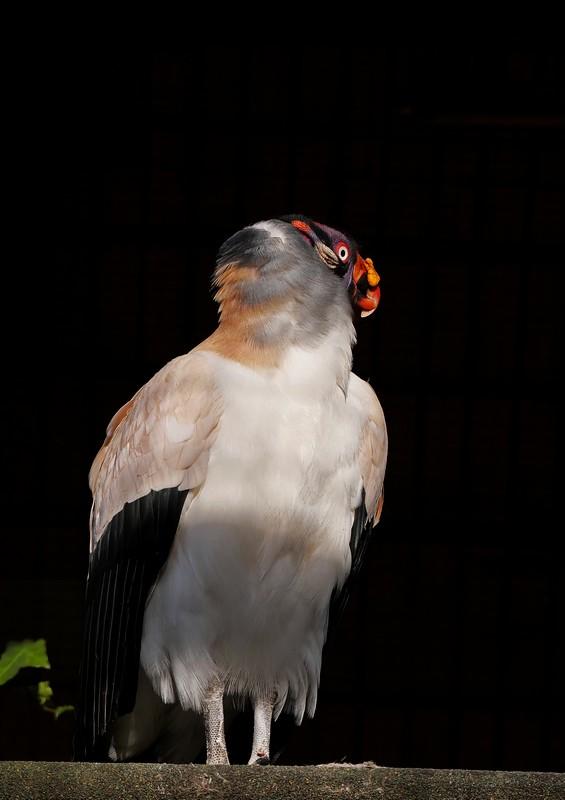 Divers oiseaux. Ajout 33747074158_636d9df56c_b