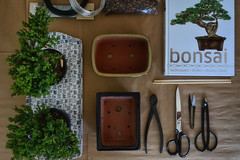 Bonsai Flat Lay