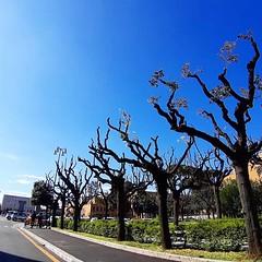 #Buongiorno Sapienza con una foto dei viali alberati di @robertosciarr1 ・・・ #Repost: «#primavera in #sapienzauniversitàdiroma :sunny: #università #lavoro #spring #igersitalia #picoftheday #nature @sapienzaroma #scienza e #montagna» ・・・ #repostSapienza #Im