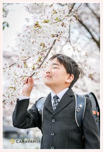 小学校入学記念のロケーションフォト 桜の花の下でランドセルを背負って
