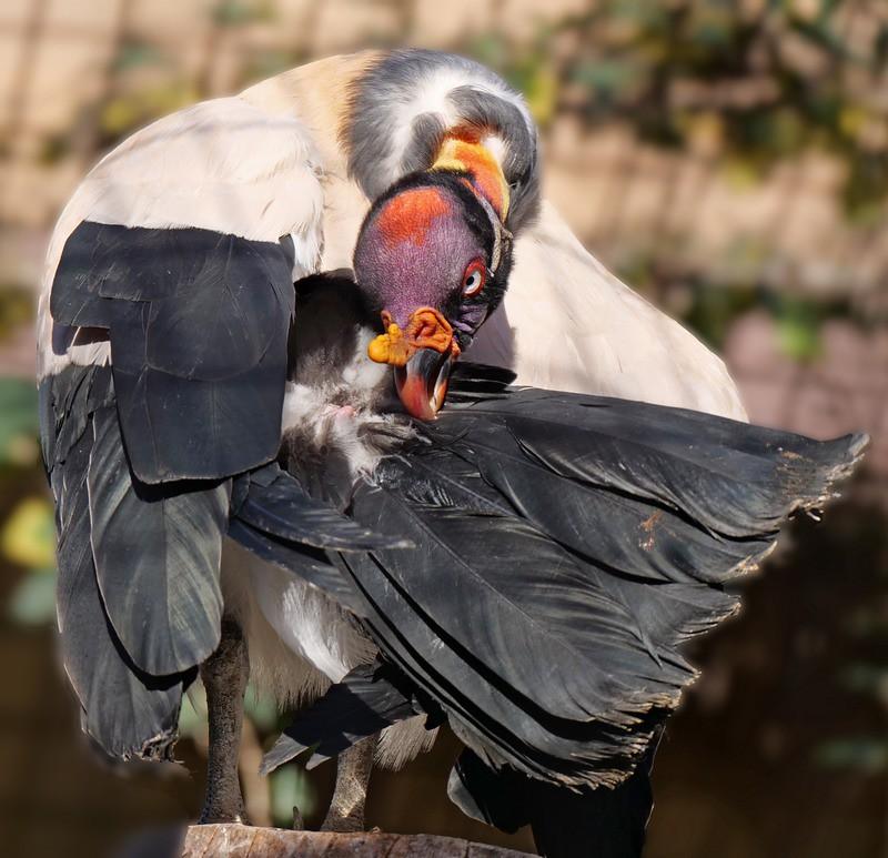 Divers oiseaux. Ajout 33755013278_f61f008756_b