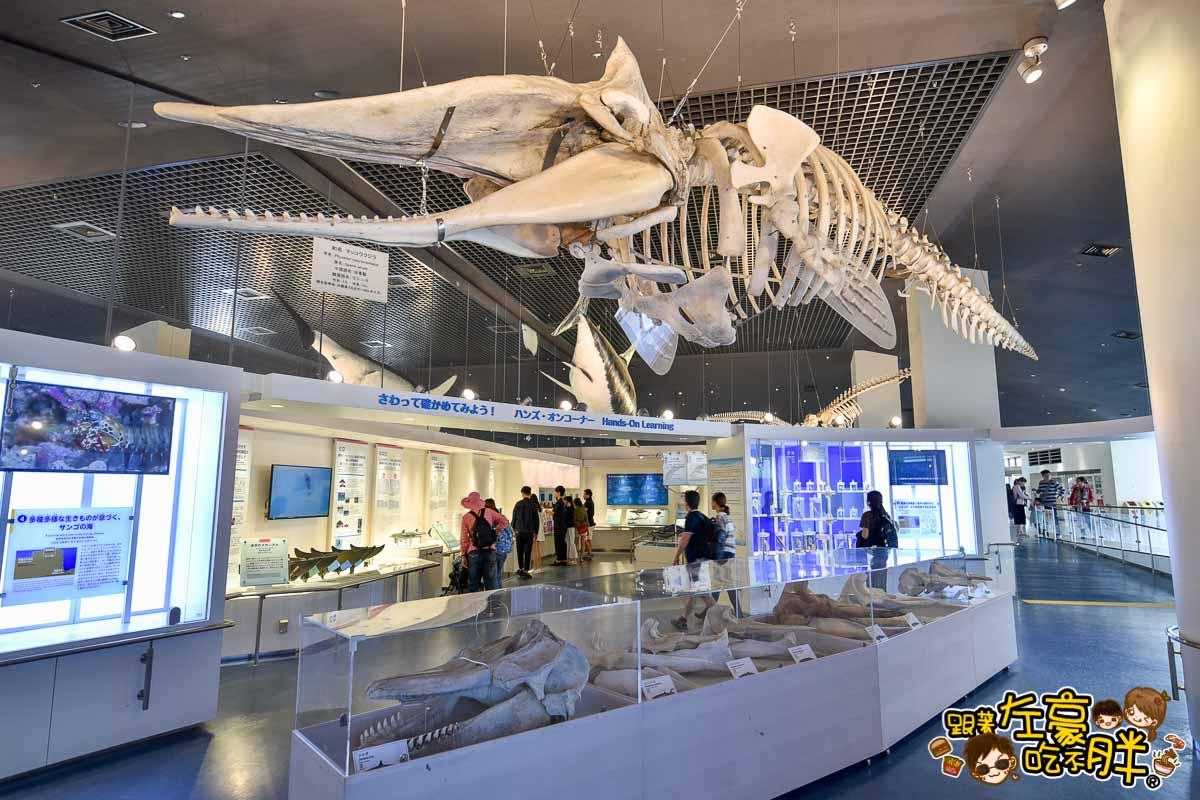 沖繩美麗海水族館-113