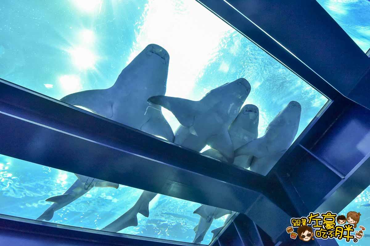 沖繩美麗海水族館-106