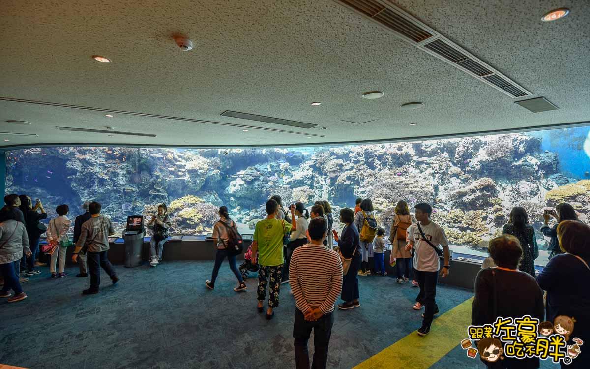 沖繩美麗海水族館-66