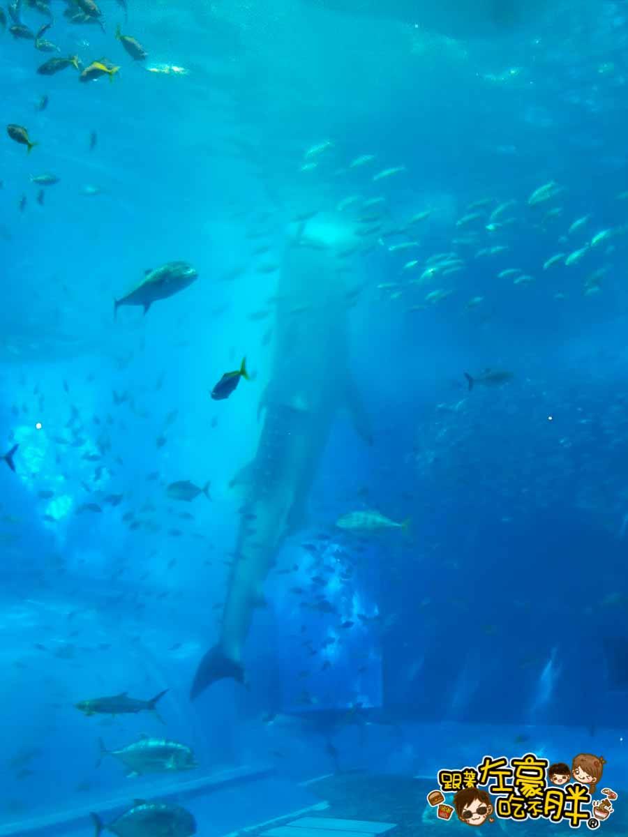 沖繩美麗海水族館-28