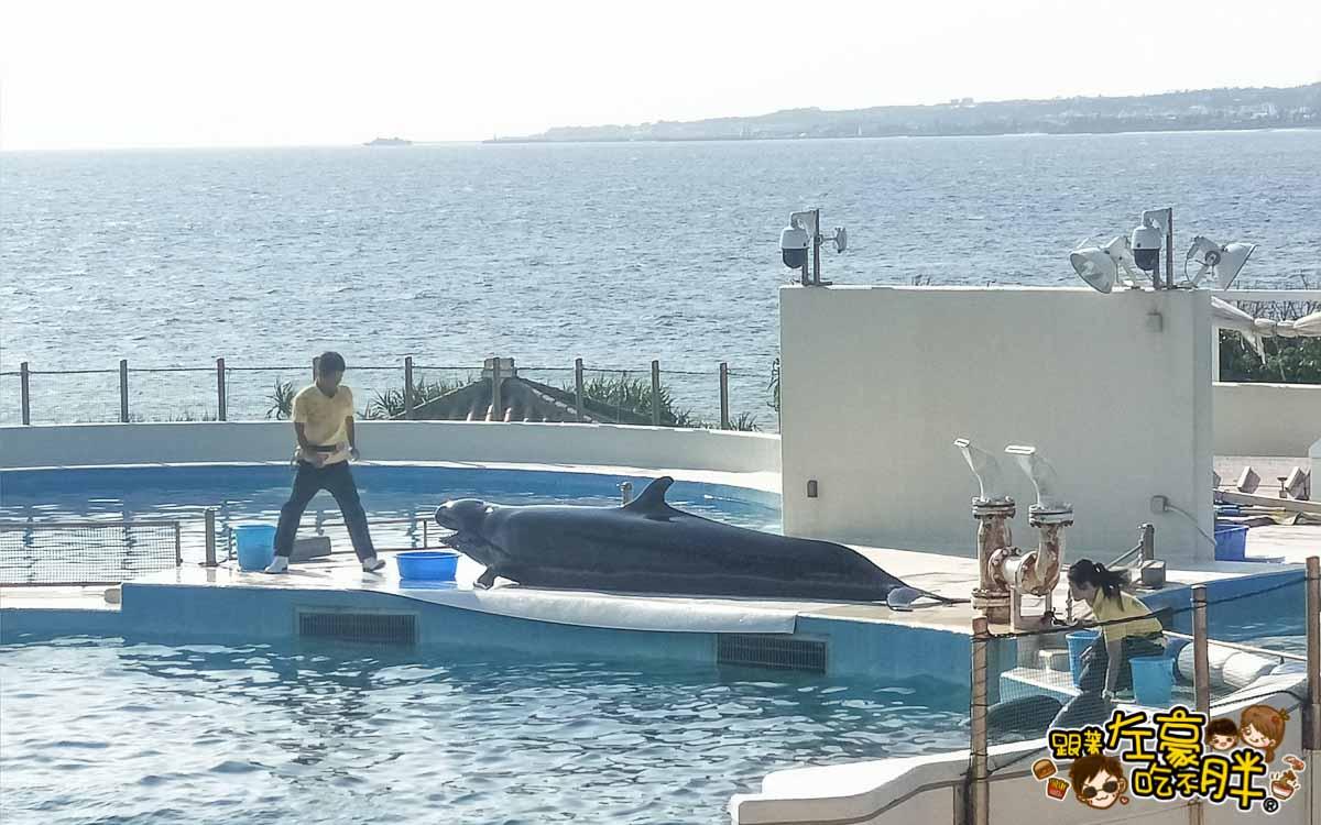 沖繩美麗海水族館-22