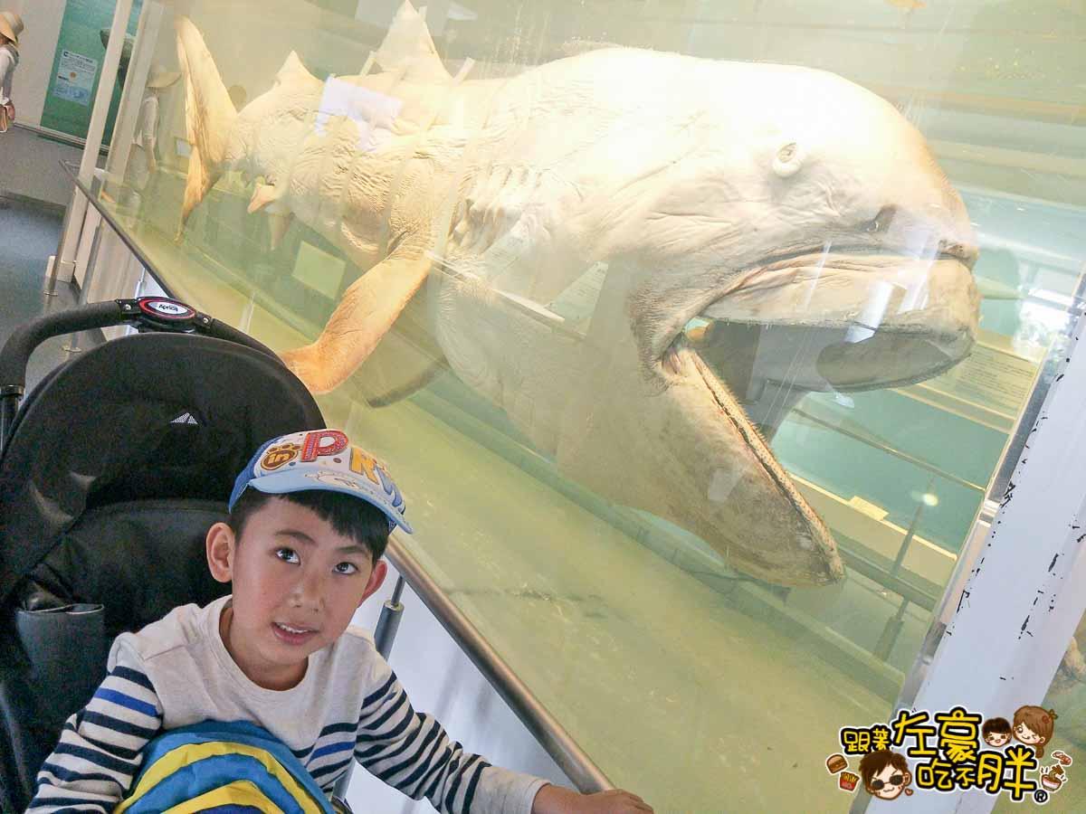 沖繩美麗海水族館-7