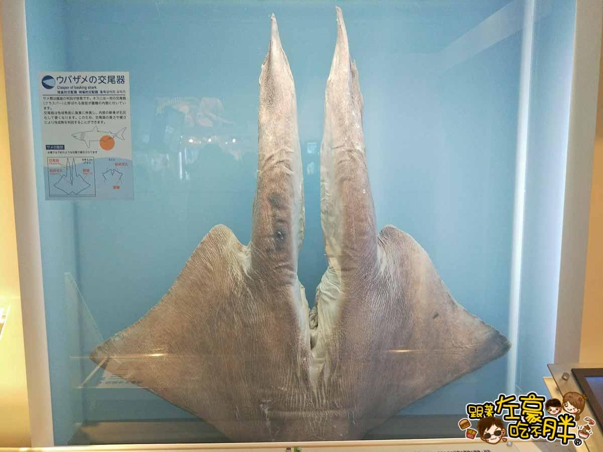 沖繩美麗海水族館-6
