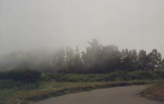 mist in Big Sur, California