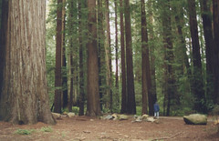 man and Redwoods