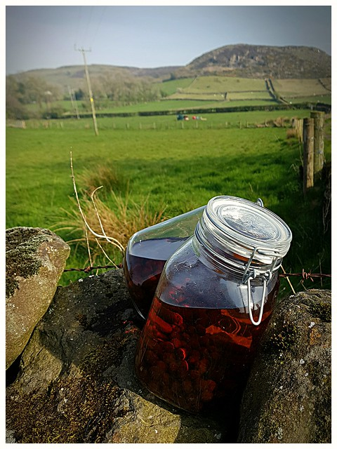 sloe gin,country style