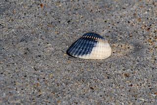 Shell and Sand   by ramseybuckeye