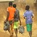 Guineafowls being taken to market, northern Ghana
