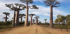 """""""Ici, à Madagascar, tout est différent : le rythme de la journée, les routes, les véhicules, les repas, les comportements, etc. ... et la misère omniprésente fait beaucoup réfléchir !"""" - Florence"""