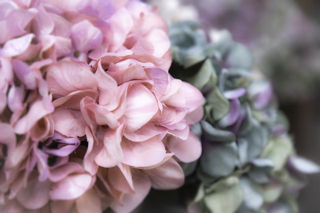 19/30: Bloomin' lovely