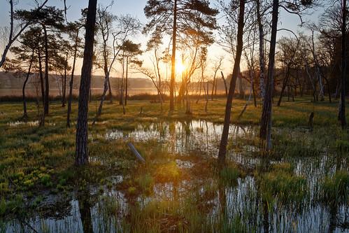 switzerland zurich sunrise lake katzensee nature outdoors sun trees water swamp
