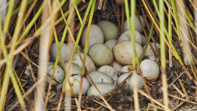 It's Egg Sighting  :)