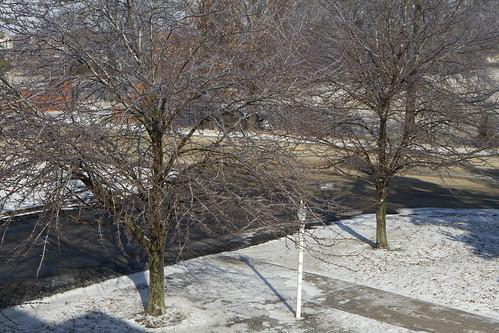trees ice winter