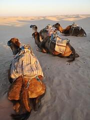 Travesia en camellos al Desierto del Sahara Douz Tunez 06