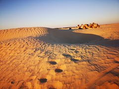Travesia ruta en camellos al Desierto del Sahara Douz Tunez 03