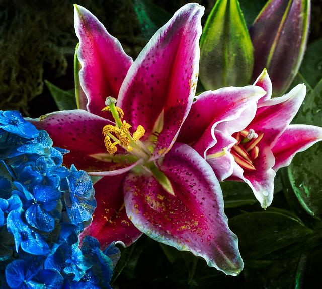 Botanical Stars