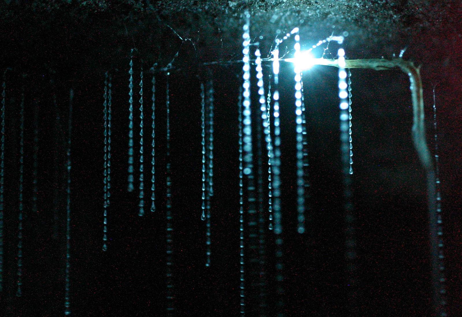 HIGH RES Spellbound glowworm threads2