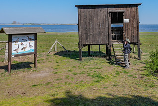 Birdwatcher im Vogelschutzgebiet Naturpark Westhavelland am Gülper See