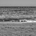 Liamssol Seaside (3)