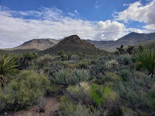 California desert scene