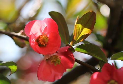 Brassées fleuries - Page 2 33773301548_2717fa0678