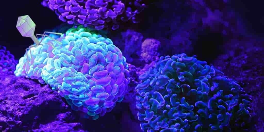 phages-cancesr-du-cerveau-incurables