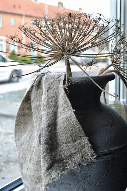 Berenklauw in kruik met linnen doek op vensterbank