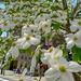 flowers by Hideki Iba