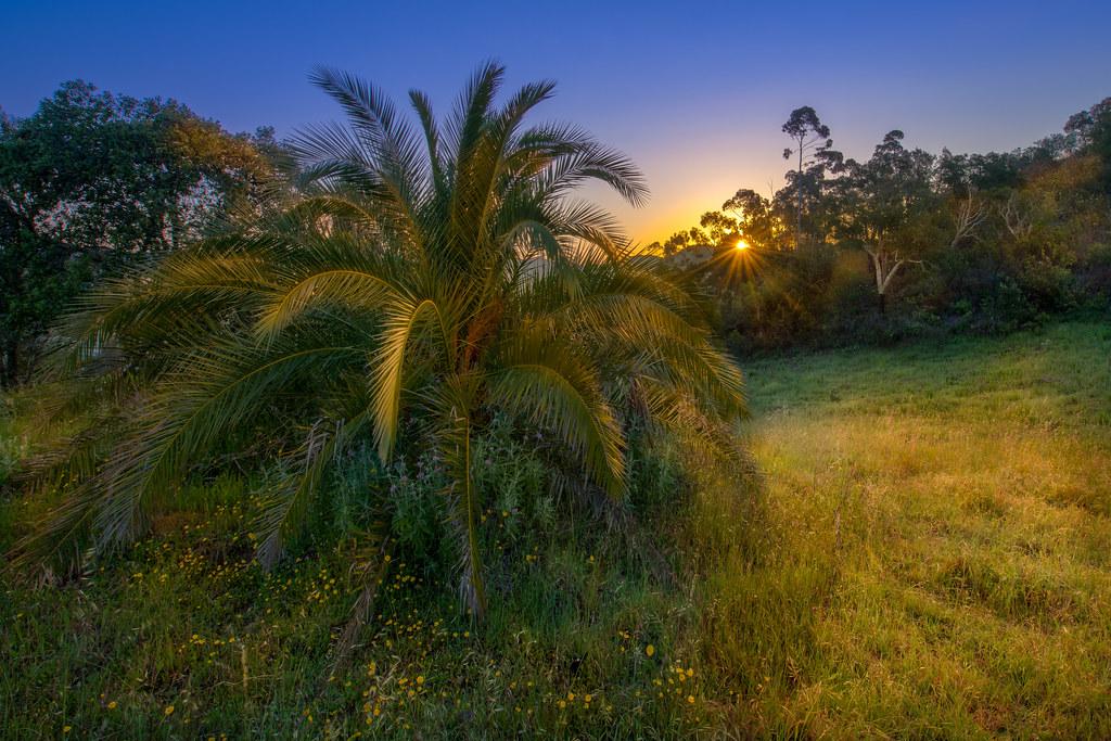 Abandoned Palm At Sunrise