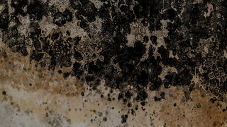 Black Mold | by Broken Window Theory