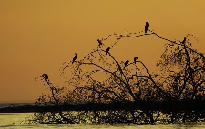 Sunset Tarcoles river Ascanio_Best Costa Rica 199A8460