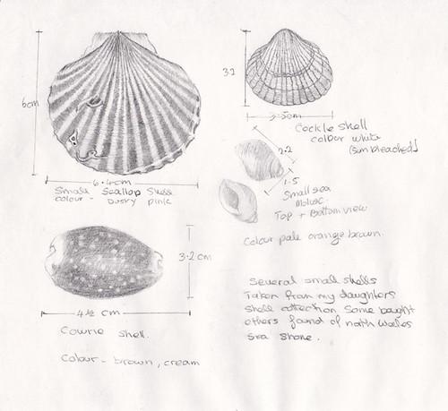 pencil drawing of shells wk 2