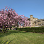Cherry Blossom Preston