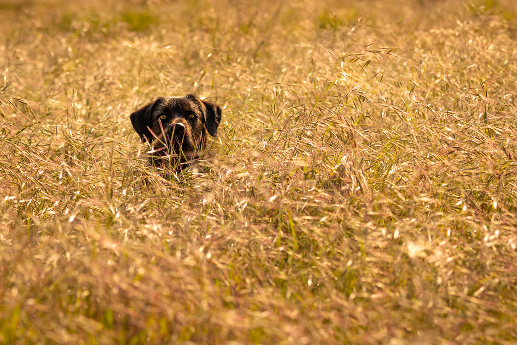 Wally Back Lit In The Long Grass