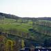 Hecken oberhalb von Mulda, Sachsen