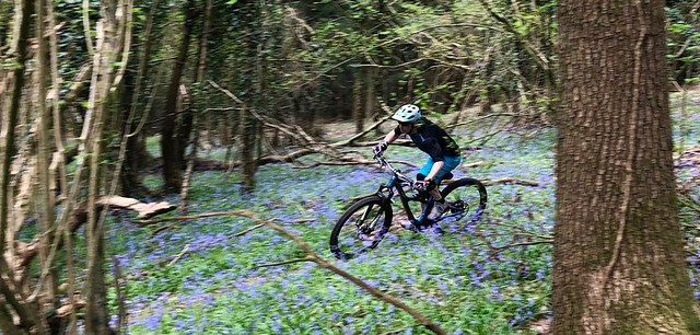 RipMo in the bluebells