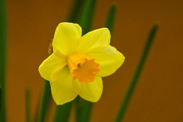 Fiorito a Pasqua