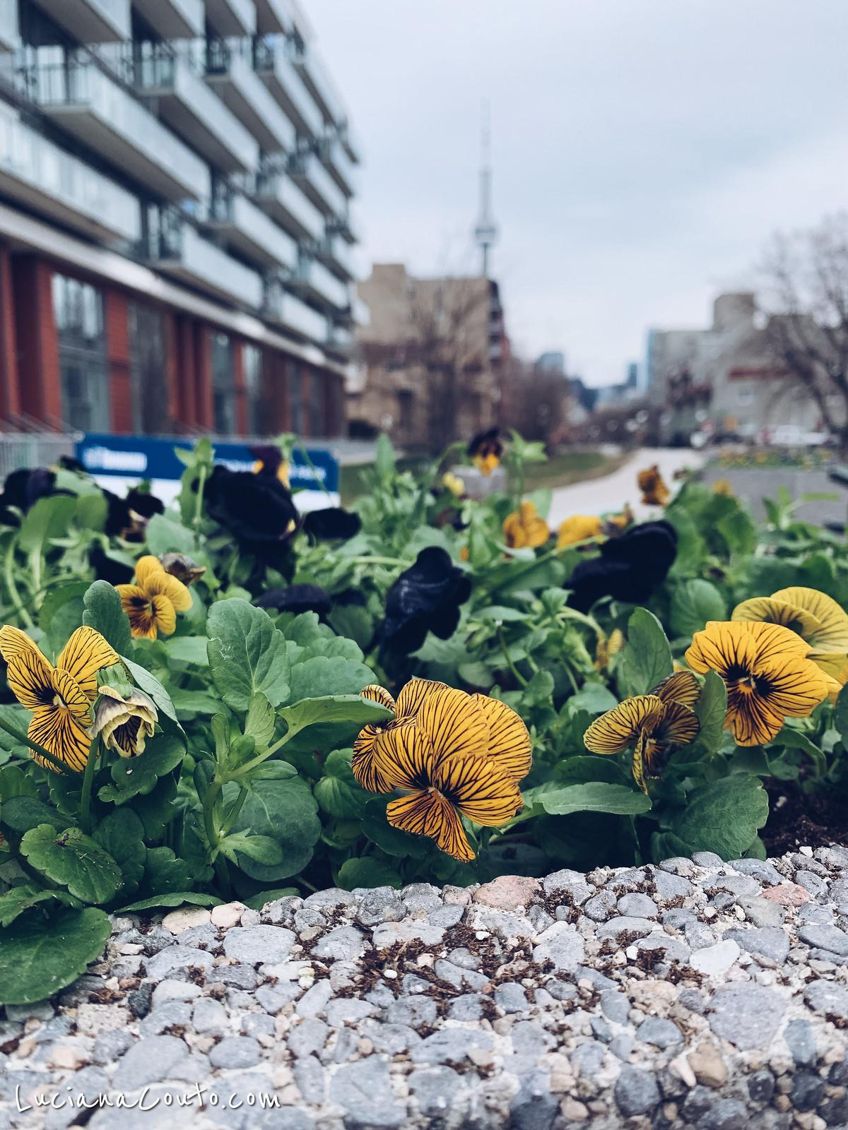 Spring in Toronto