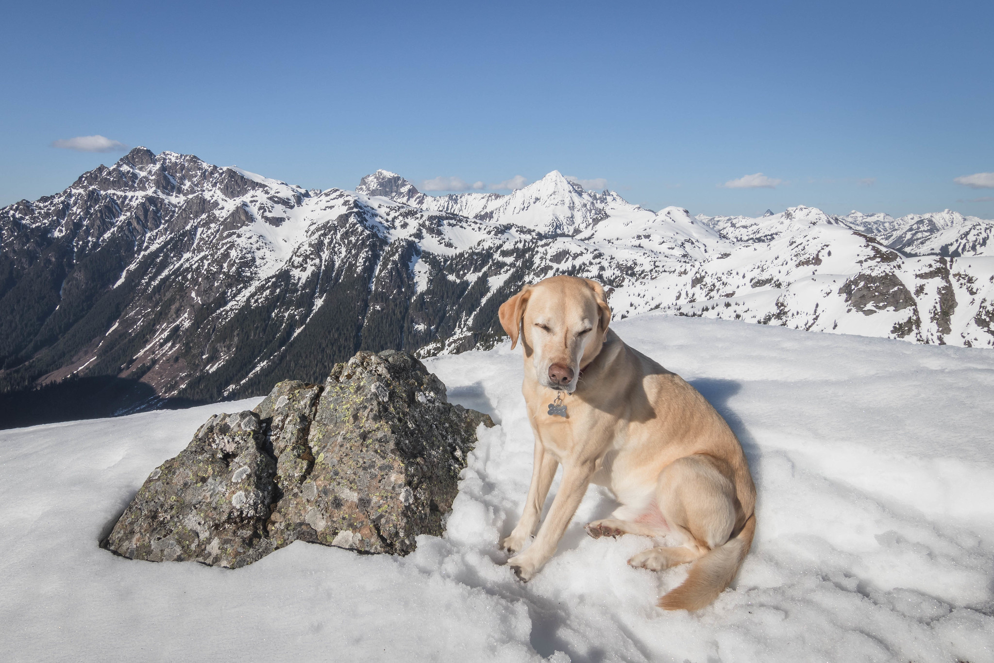 Summit dogs on Welcome Butte