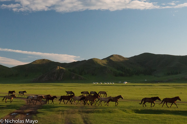 Horses In The Iven Valley