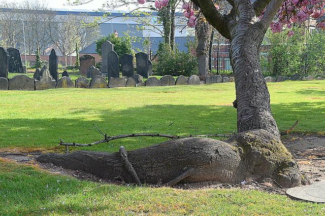 It's a Tree Trunk..