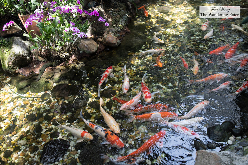Indoor koi fish pond