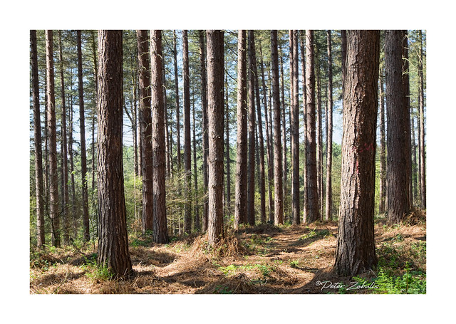Blidworth Woods