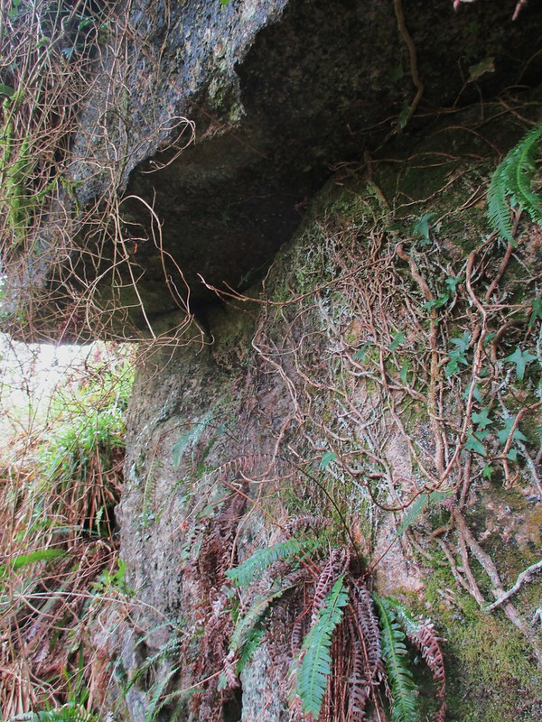 Brimpts Rocks Northern Wood overhang (close up)