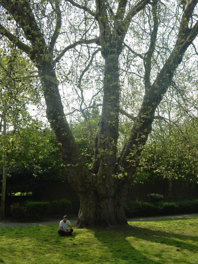 Big tree Waterlink Way